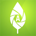 ArbrallergiK : l'application pour identifier les arbres allergisants