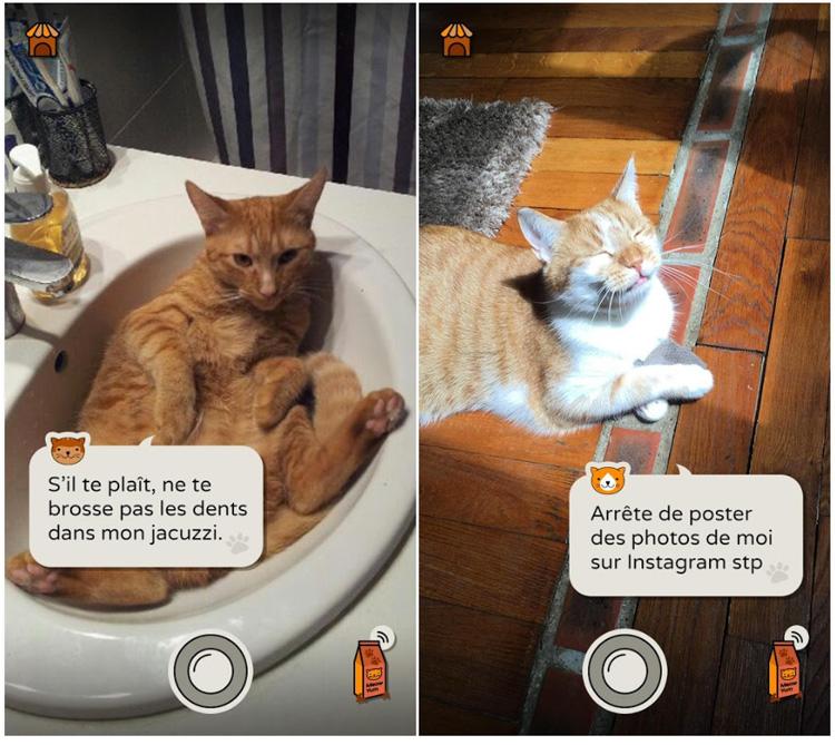 Frimousse, une application qui fait parler les chats