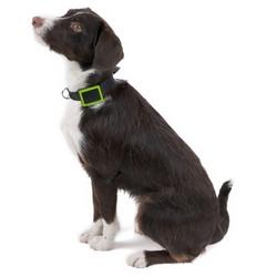 Le collier connecté Weenect Pets est disponible chez SFR