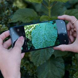 OnePlus révèle son OnePlus 7T